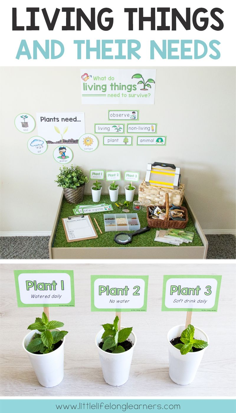 living things animals plants and their needs science kayli kindergarten science. Black Bedroom Furniture Sets. Home Design Ideas