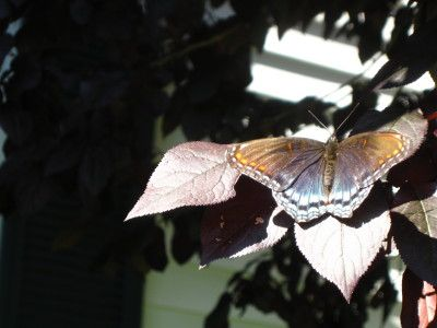 Butterfly - what kind?