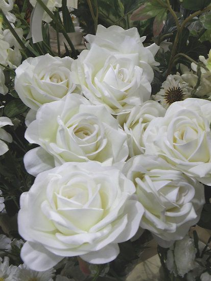 White Roses Bundle Blooming Branches Easy Going Relaxing Beautiful Flowers Flowers White Flowers