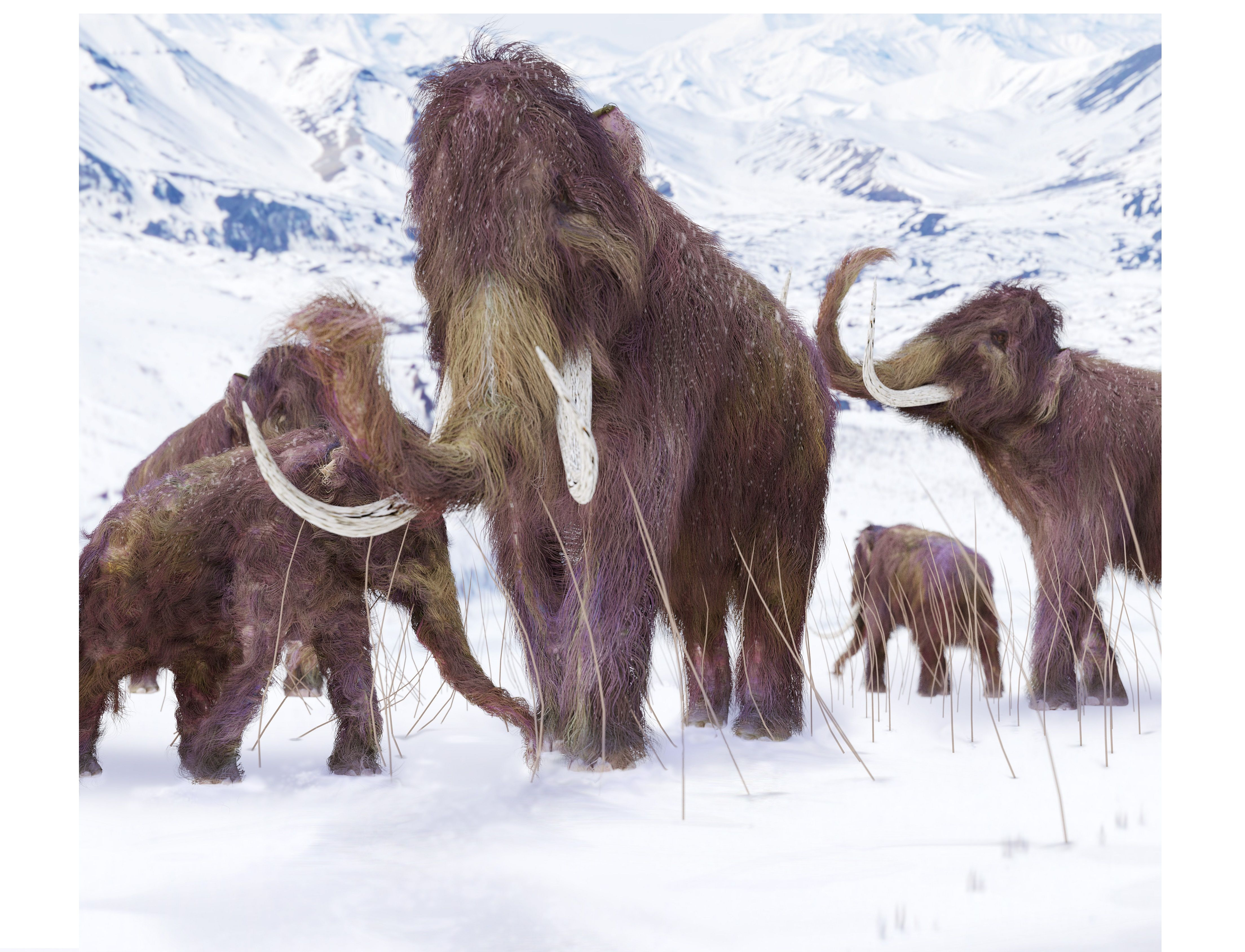 Scientists Successfully Insert Woolly Mammoth DNA Into
