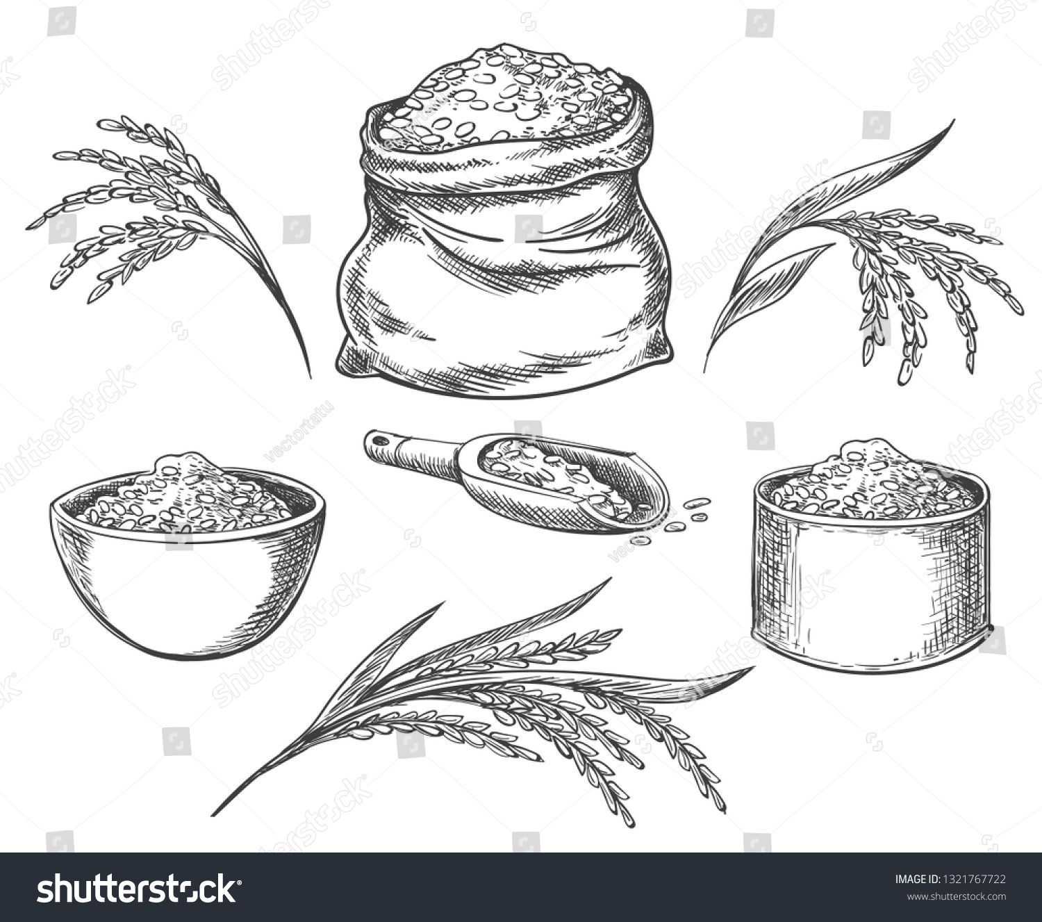 Cereal Rice Hand Drawn Grained Rice Seed Isolated On White Background Healthy Eating Grains Cereals How To Draw Hands Character Design Tutorial Rice Cereal