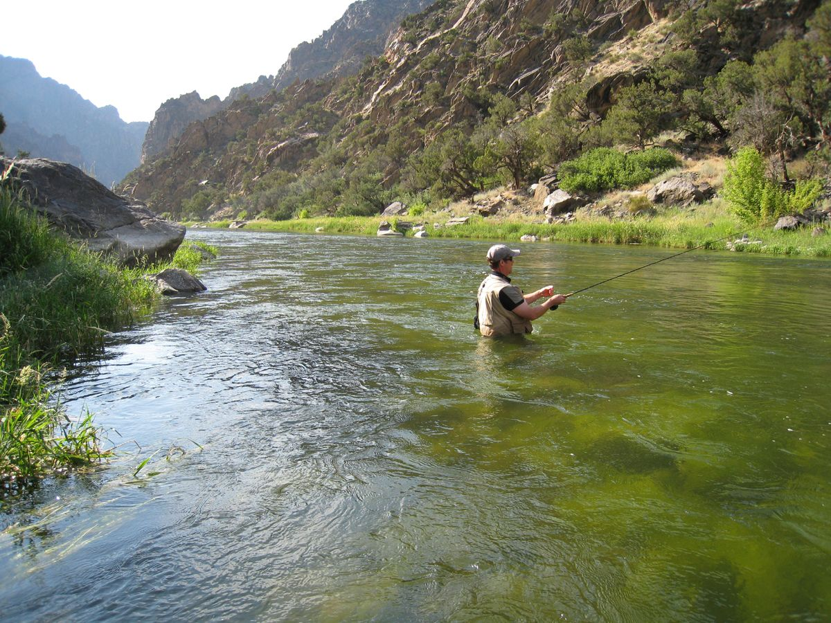 Black canyon gunnison river rocky mountain high for River fly fishing