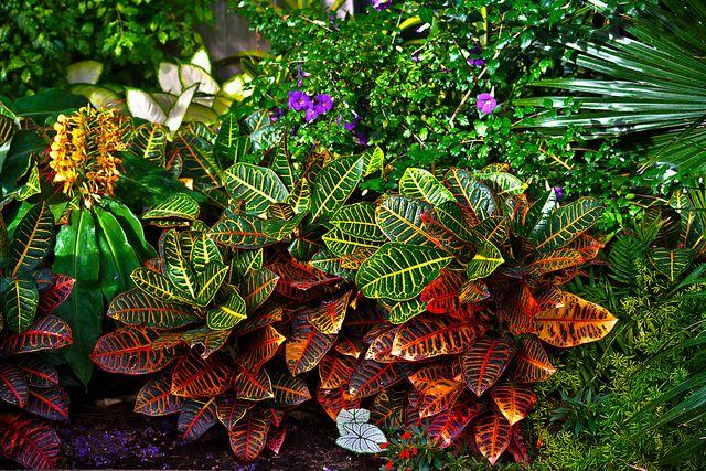 Free Plant Identification Tropical plants, Plants, Plant