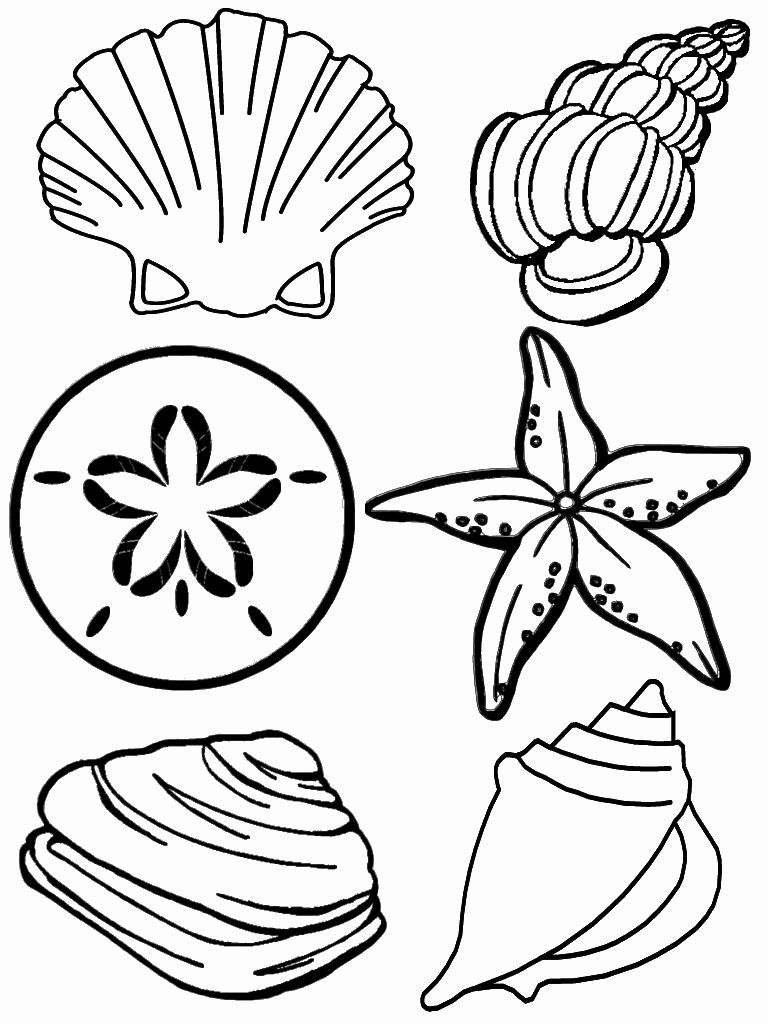 Mermaids Coloring And Activities Awesome Free Printable Seashell Coloring Pages For Kids In 2020 Beach Coloring Pages Summer Coloring Pages Coloring Pages