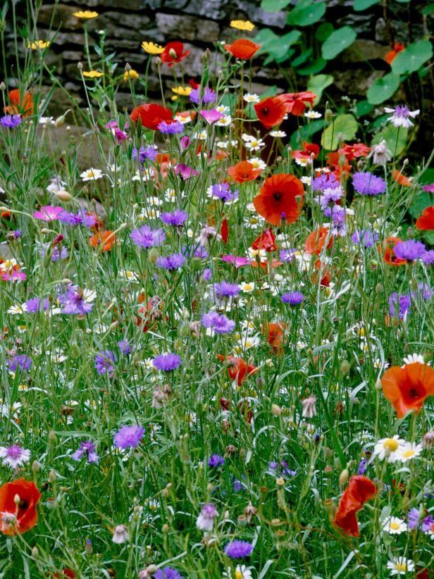 how to grow a wildflower garden en anglais prairie et fleuri. Black Bedroom Furniture Sets. Home Design Ideas