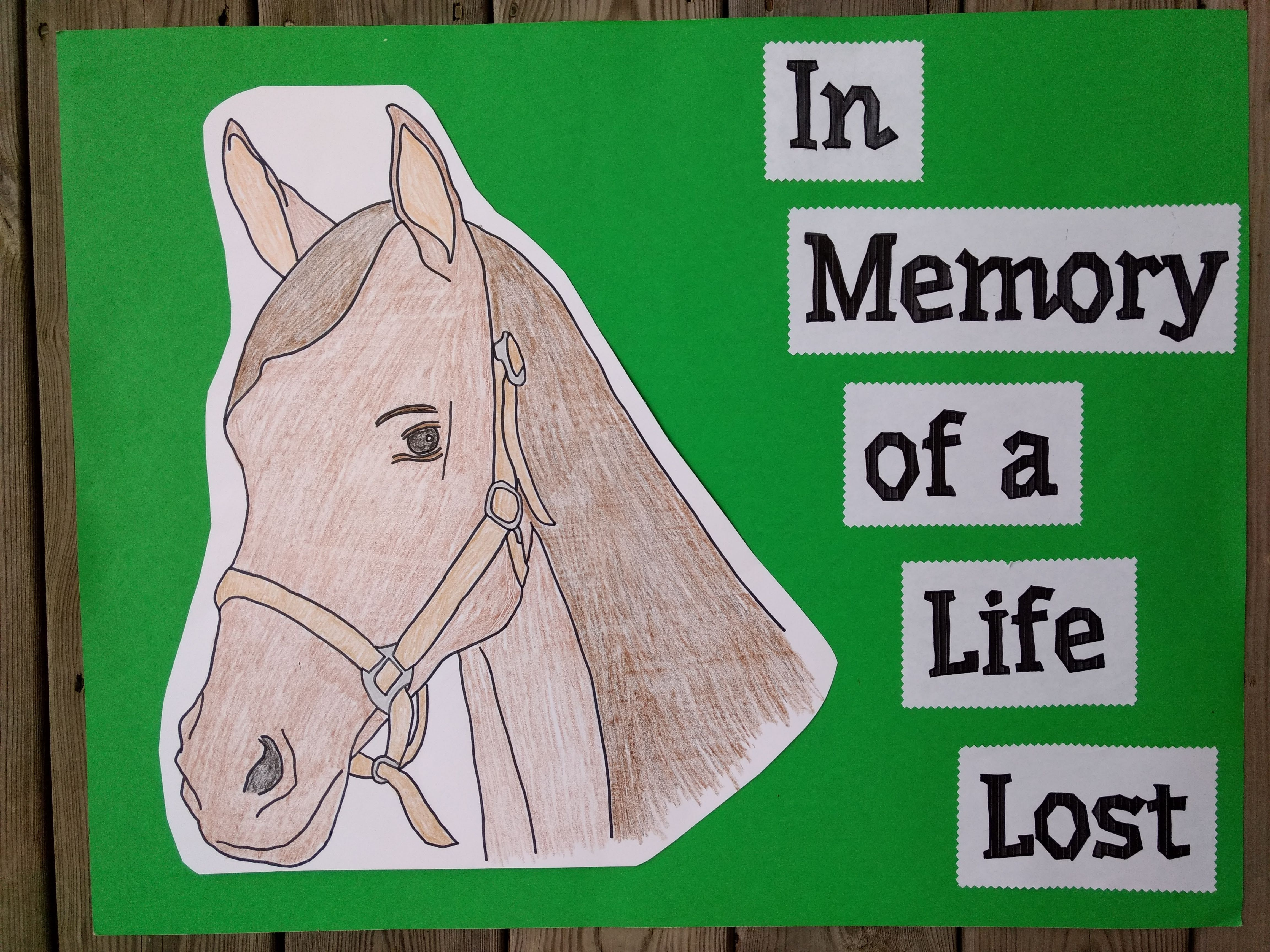 Horse Racing Horse Racing Horses Animal Activist