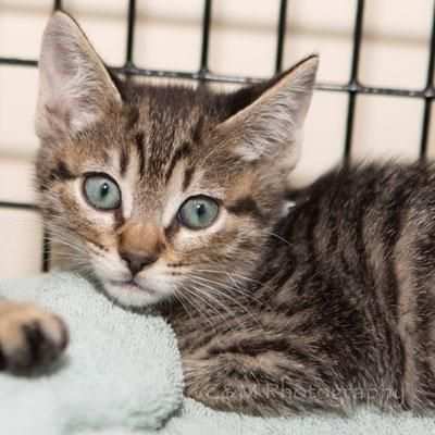 Calvin was adopted on 6/9/14!