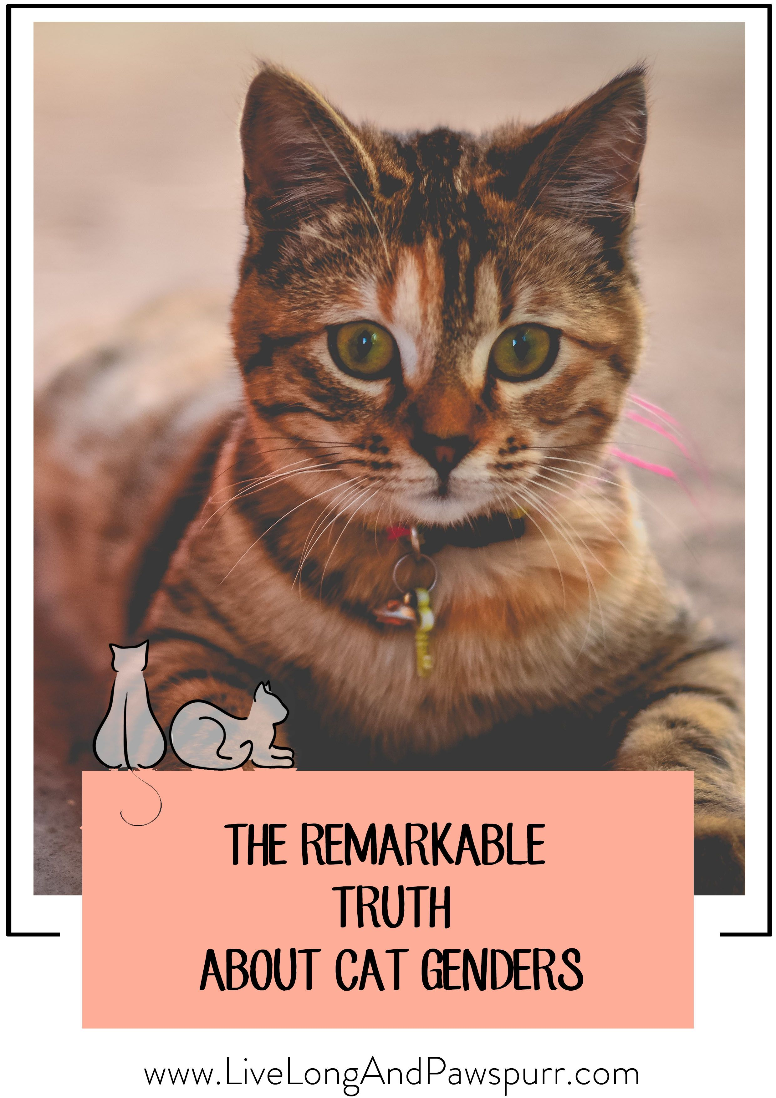 The Remarkable Truth About Cat Genders Which is best for