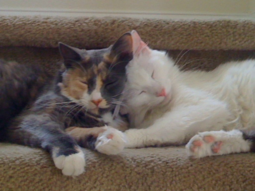They Are Best Friends Cute Cats Kitty Best Friends