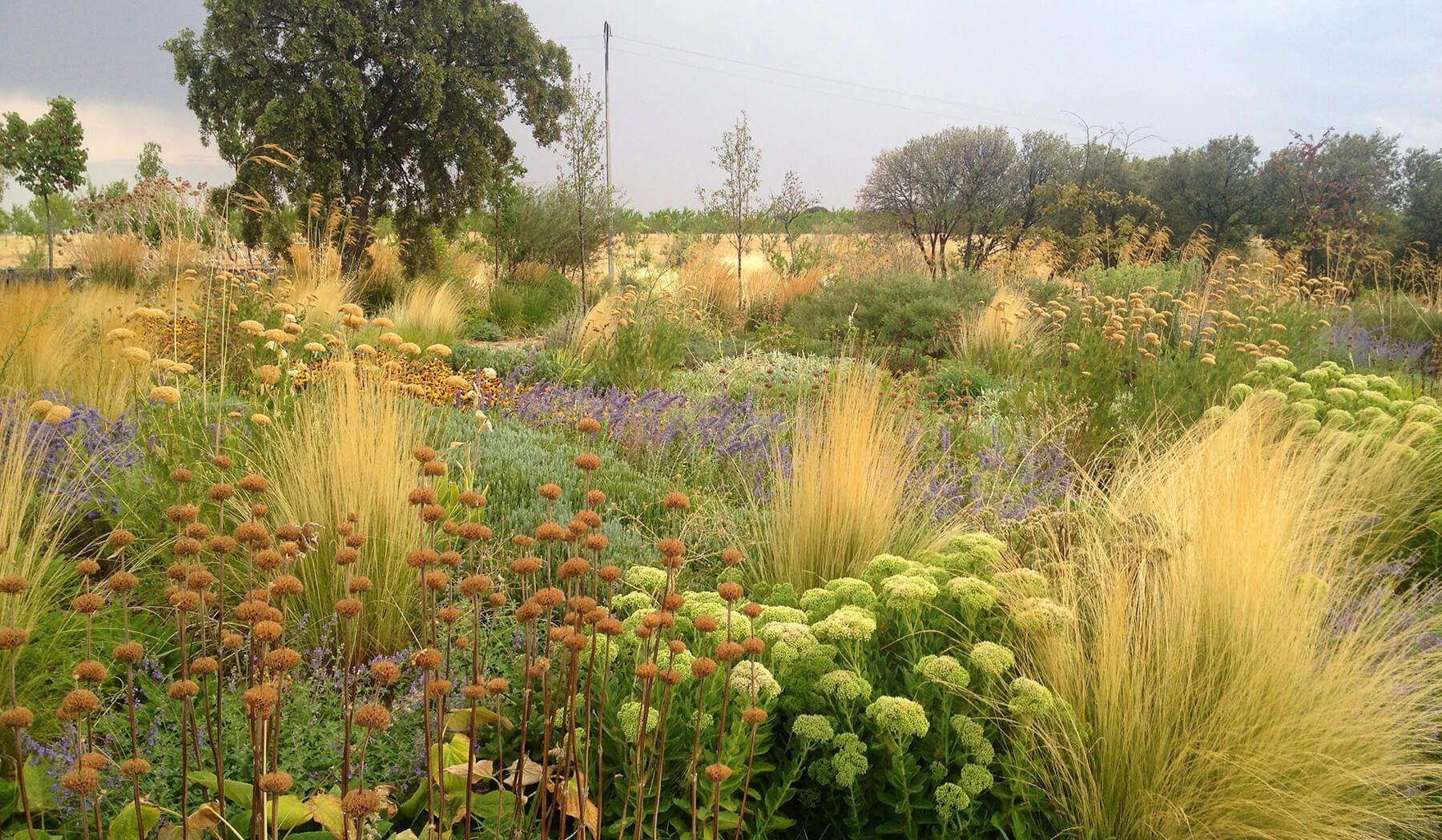 Landscape Gardening Course Cambridge Landscape Gardening Basingstoke Landscapegardeningdegree With Images Mediterranean Landscaping Dry Garden Drought Tolerant Garden
