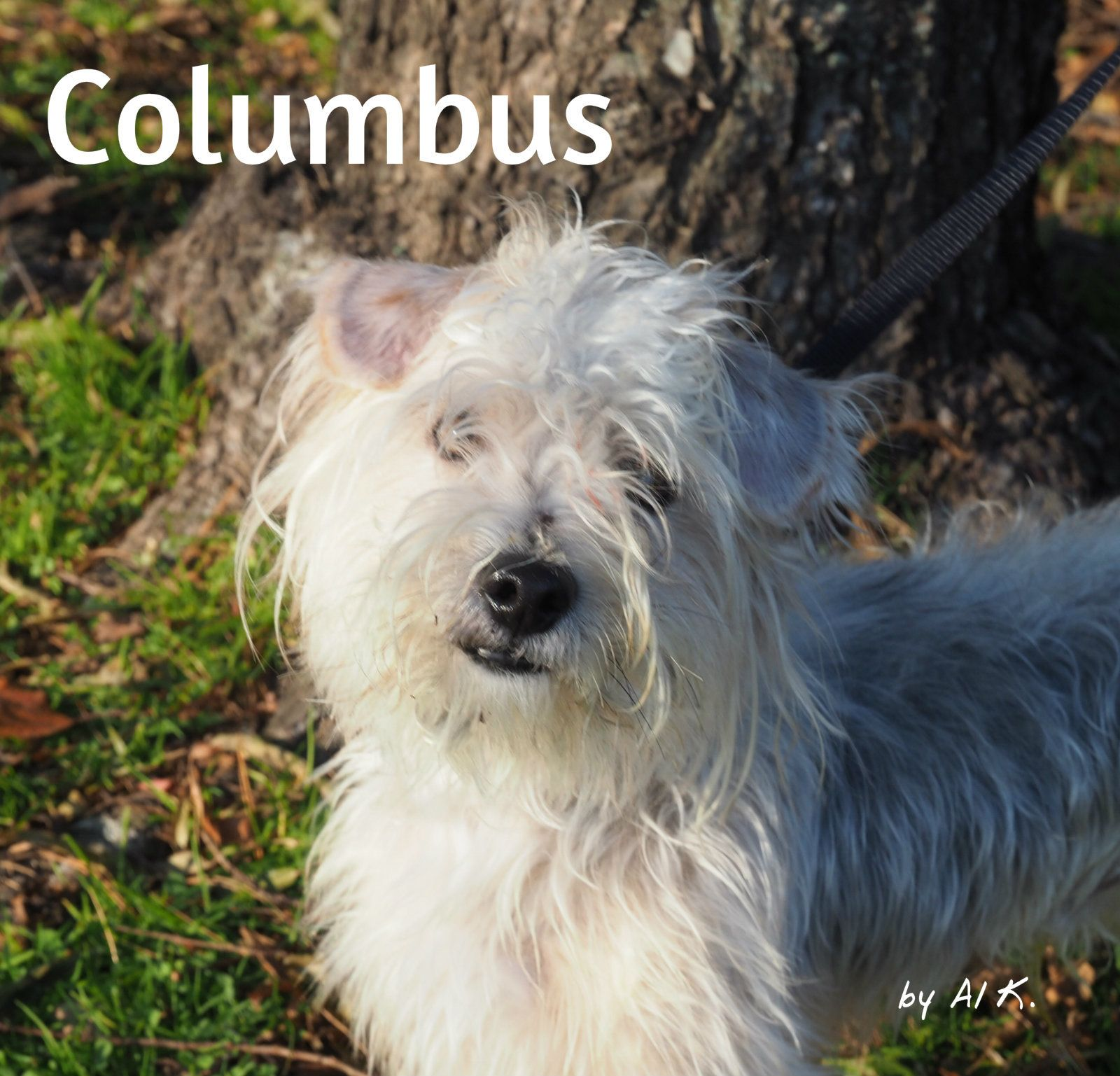 Adopt Columbus On Adoptable Dogs Cairn Terrier Terrier Dogs Dogs