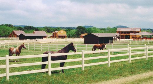 Fenced Paddocks With Lush Green Grass And Loafing Sheds