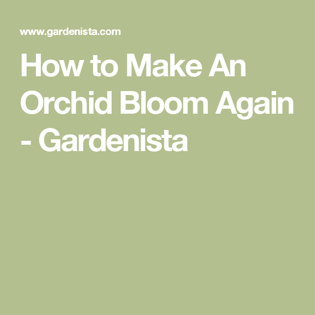 How to Make An Orchid Bloom Again - Gardenista