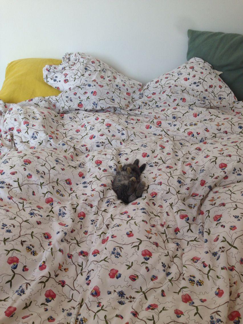 Sleeping rabbit Linda