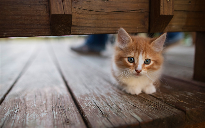 Download Wallpapers Ginger Fluffy Kitten Cute Look Small Animal