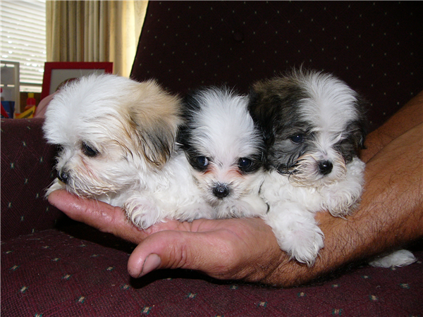 Could They Be Any Smaller Really Cute Dogs Cute Small Dogs Cute Little Dogs