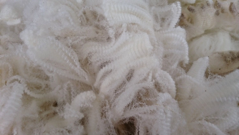 Merino Fleece Merino Wool Australian Merino Wool Natural Fibre Raw Fleece Unprocessed White Superfine 250 Gram Bags Natural Fibers Wool Merino Wool