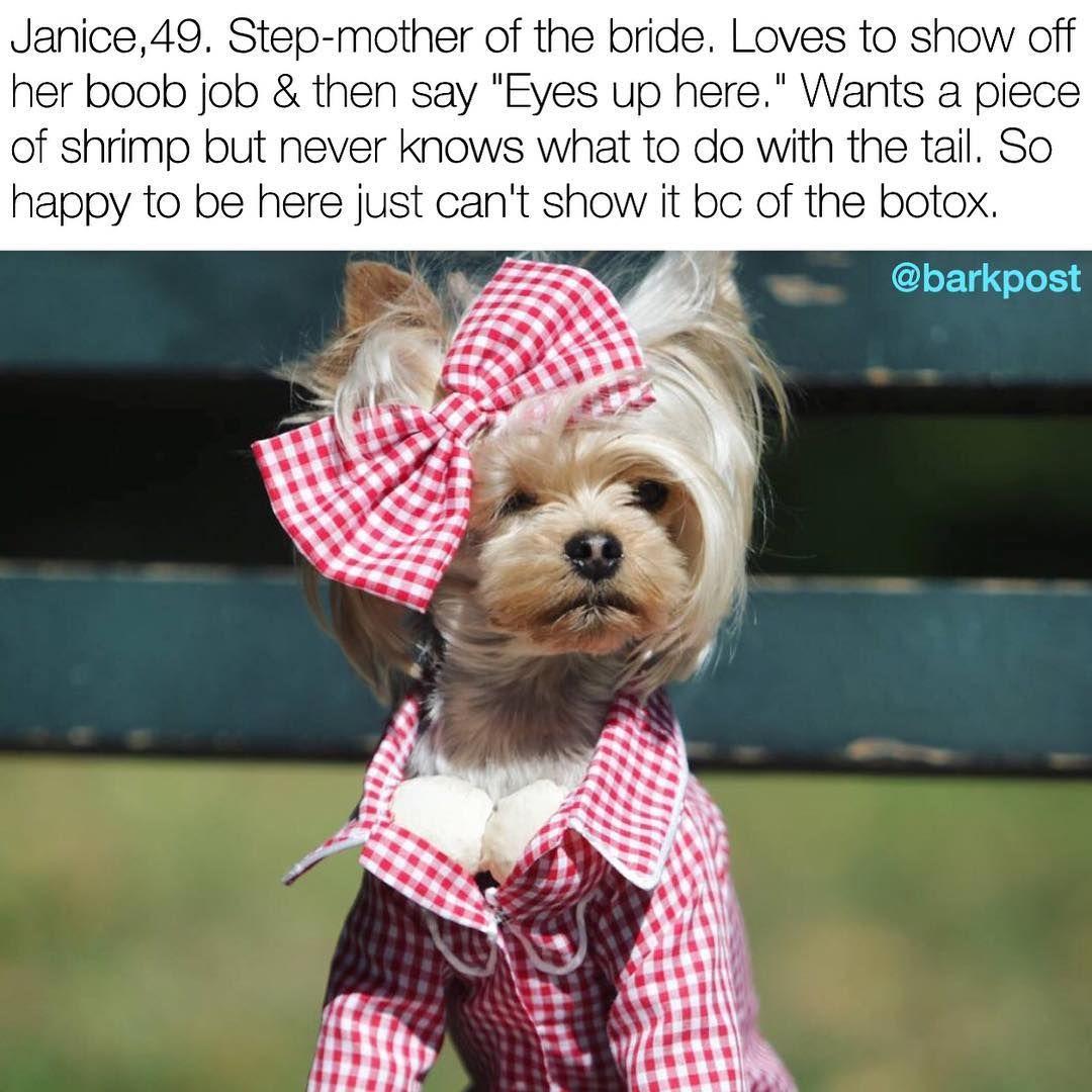 No really, she's smiling. DogWeddingBios Janice little