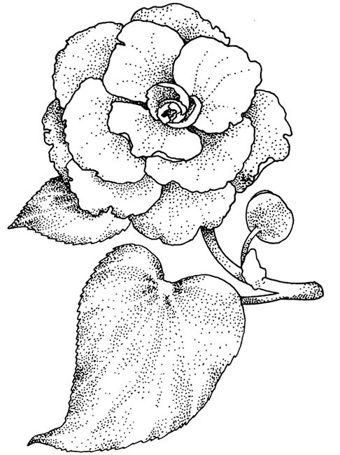 Welcome To Dover Publications Coloring Pages Flower Drawing Printable Coloring Pages