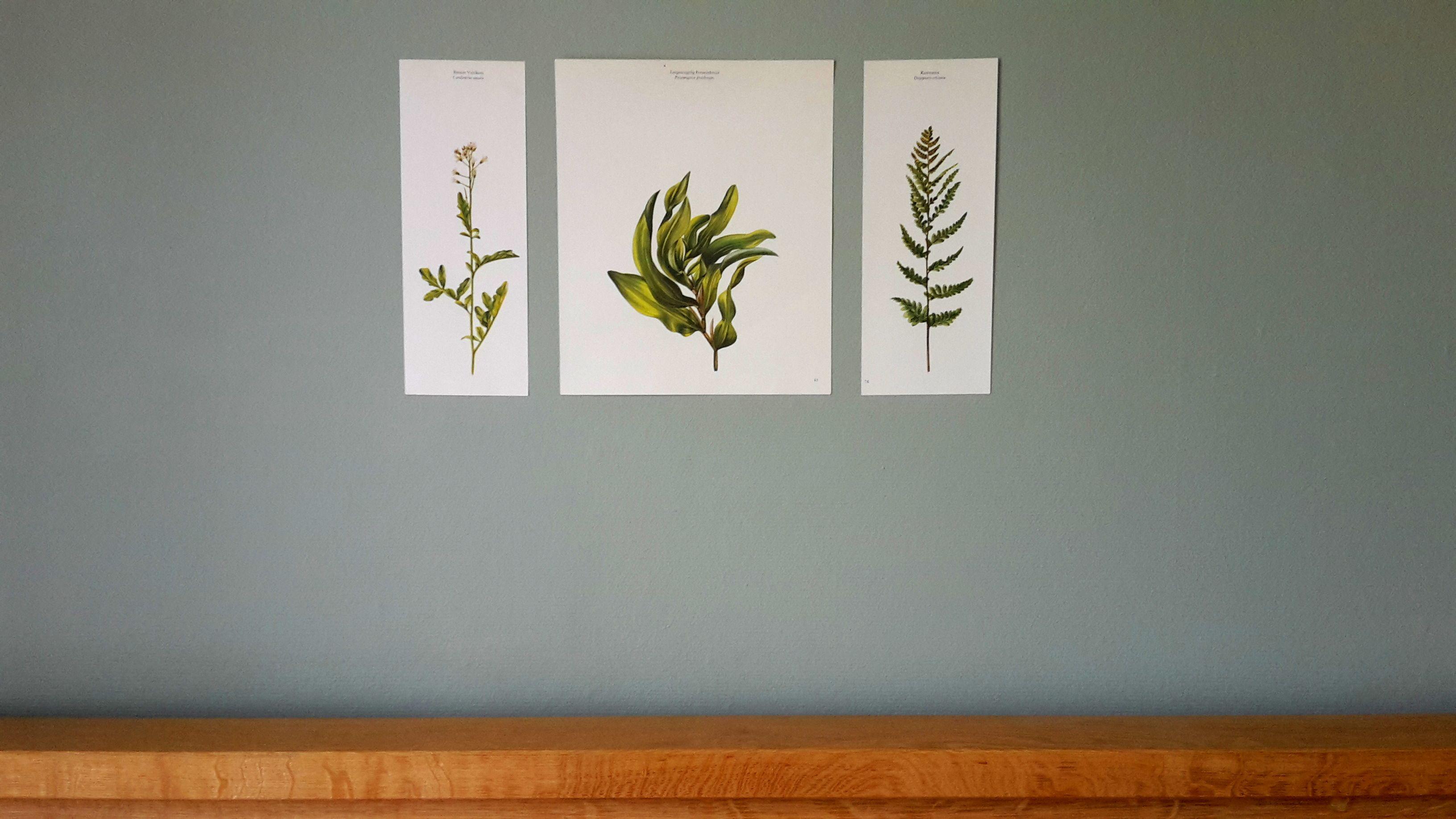 Oude Botanische Prenten : Botanical botanische prenten leuk om op te hangen met of zonder