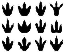 Pin By Robyn Davidson On Weird Animals Vbs Dinosaur Clip Art Dinosaur Footprint Dino Footprint