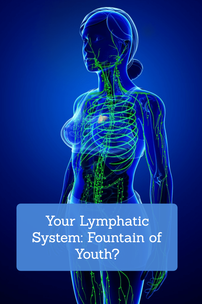 Your Lymphatic System Fountain Of Youth Diet Detox Exercise