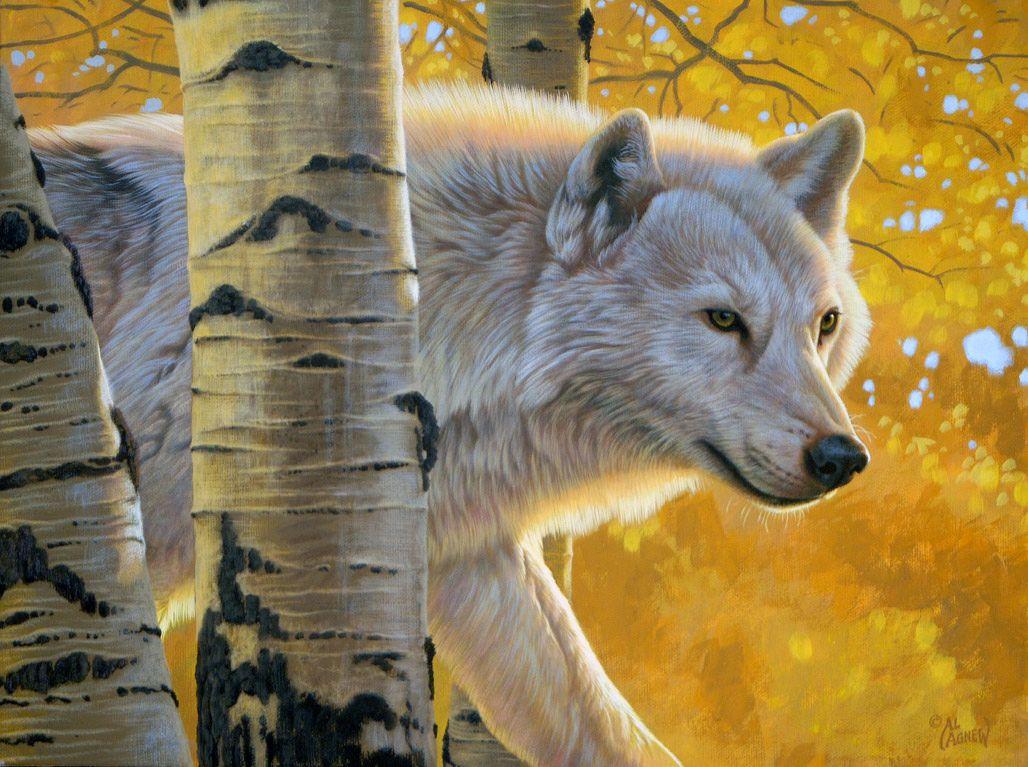 широкоформатной осенний волк рисунок томаты можно теплицах