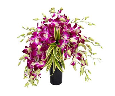 With our wide range of unique and beautiful flowers  bouquets and arrangements, perfectly in tune with the wonders of nature, and our excellent delivery service, mumbaiflora.