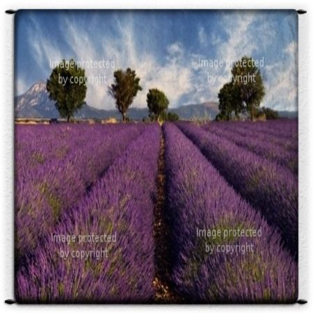 Add a beautiful field of lavender to bring some colorful style to any bedroom with our Lavender Field Wall Tapestry design at http://www.visionbedding.com/lavender-field-in-provence-france-custom-size-microsuede-wall-tapestry-p-2247917.html