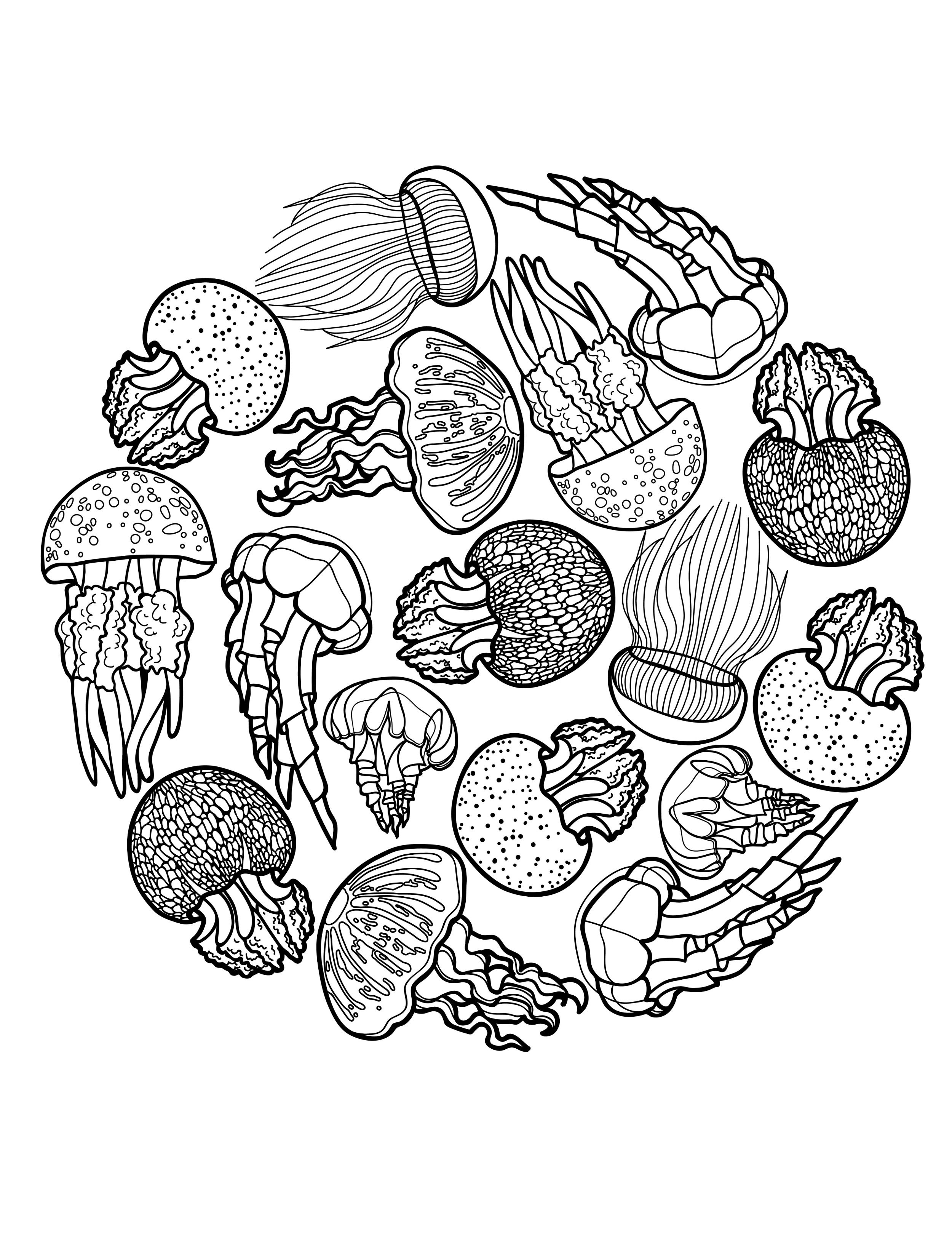 Jellyfish Coloring Page Freedownloadableadultcoloringpagewithjellyfish