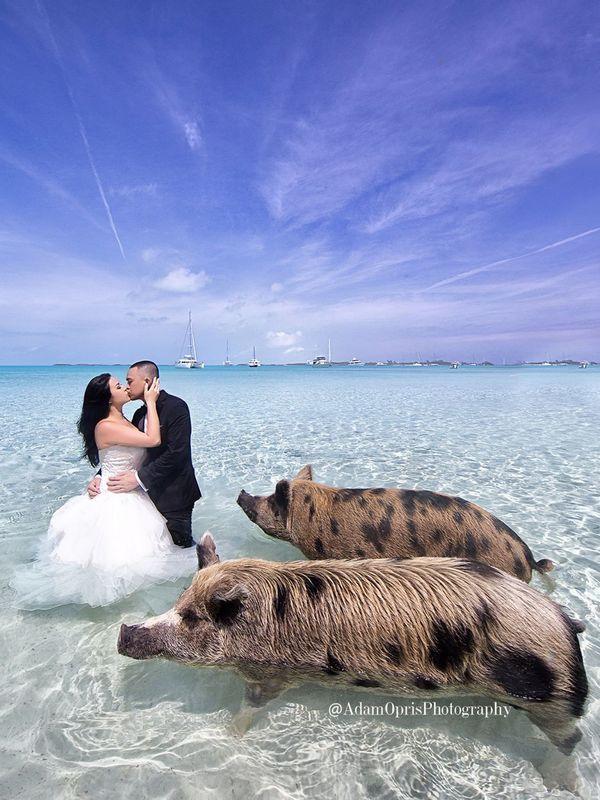 20 Of The Prettiest Beach Wedding Photo Ideas Beach Weddings