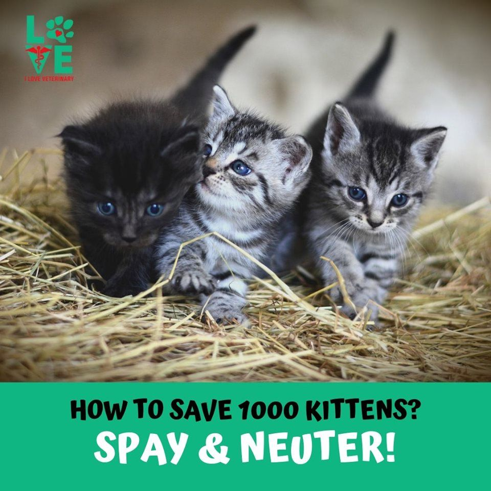 Spay & Neuter your cats! Cats, Kittens, Animals