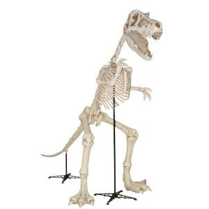 Home Accents Holiday 9 Ft Standing Skeleton T Rex Dinosaur With Led Illuminated Eyes 7342 99908 A Halloween Creatures Home Depot Halloween Halloween Skeletons