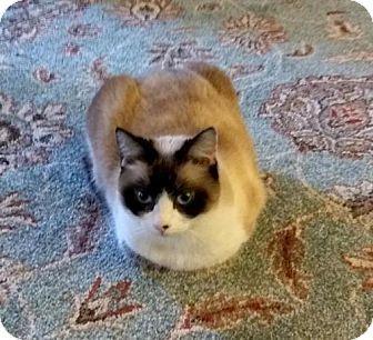 Free Kittens Hillsboro Oregon - Kitten