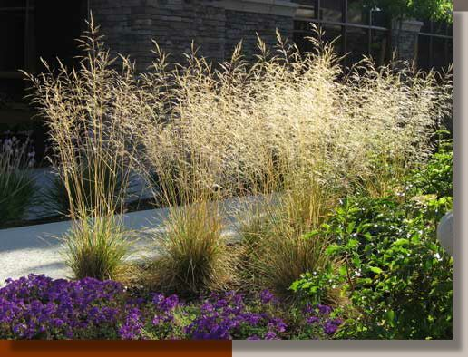 Image Result For Central Oregon Landscaping Ideas Ornamental Grasses River Birch Trees Outdoor Gardens