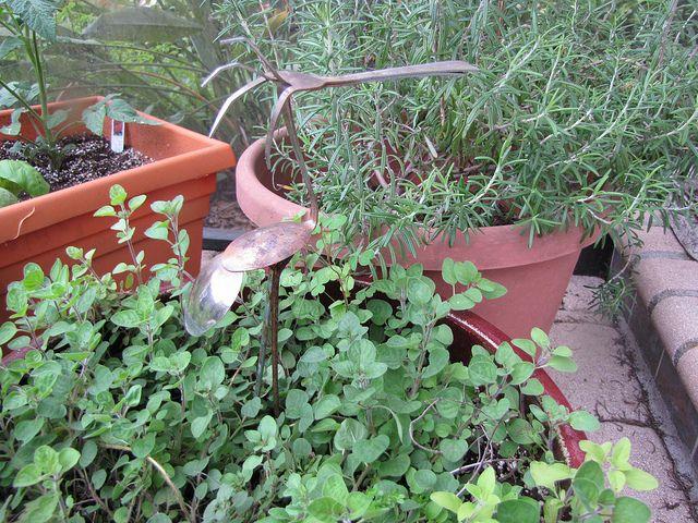 herb gardening in pots, by Idiot's Kitchen