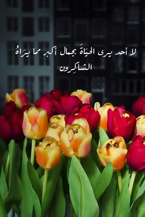 Pin By Mya On Islam Words Tulips Arabic Quotes