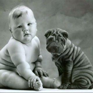 Great Shar Pei Chubby Adorable Dog - 3c976abcbdc36b1606f4a76cda319300  HD_607293  .jpg
