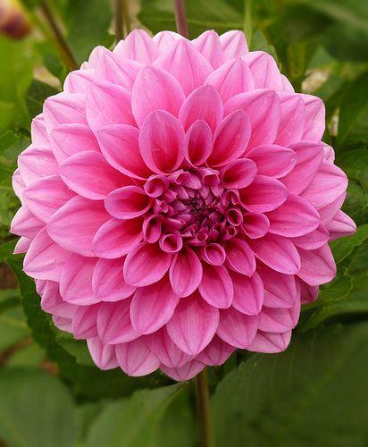 Chrysanthemums Bloom In September Party Ideas