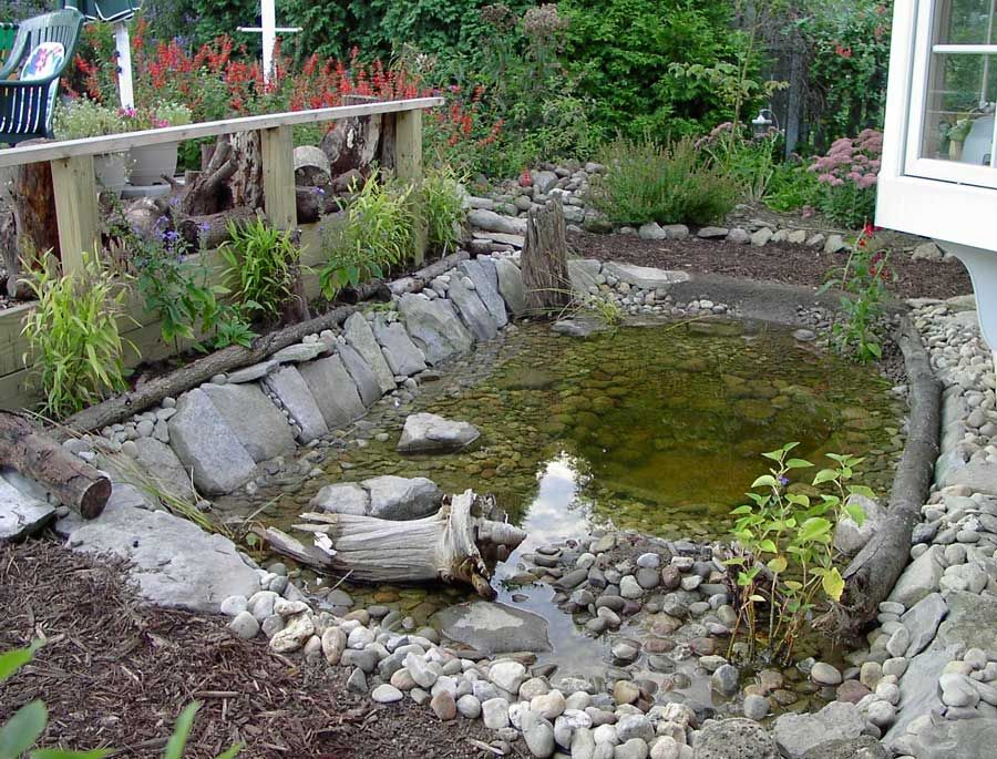 Wildlife pond finished water gardening pinterest for Backyard pond animals