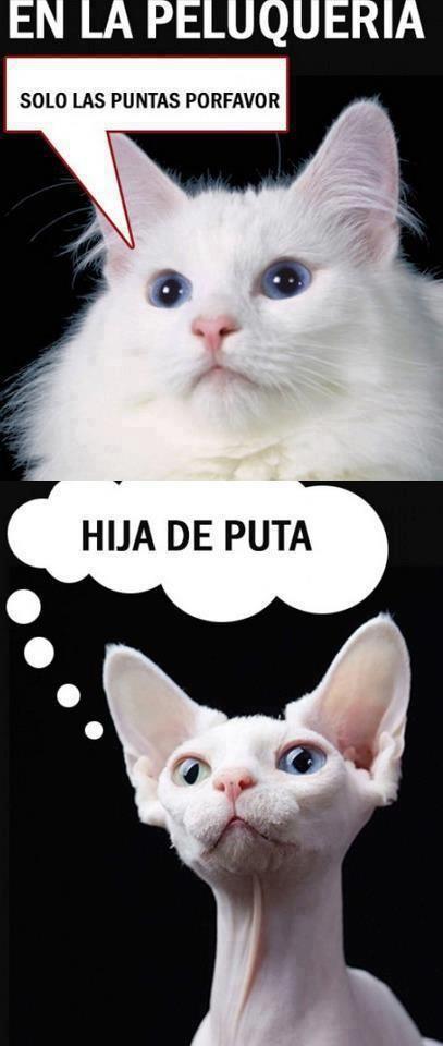 Memes De Gordos Chistosos