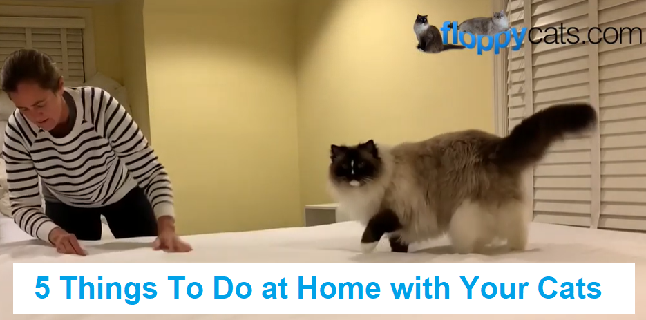 5 Things To Do at Home with Your Cats in 2020 (With images