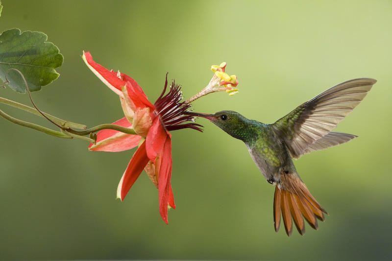 Resultado de imagen para imagenes reales de colibries