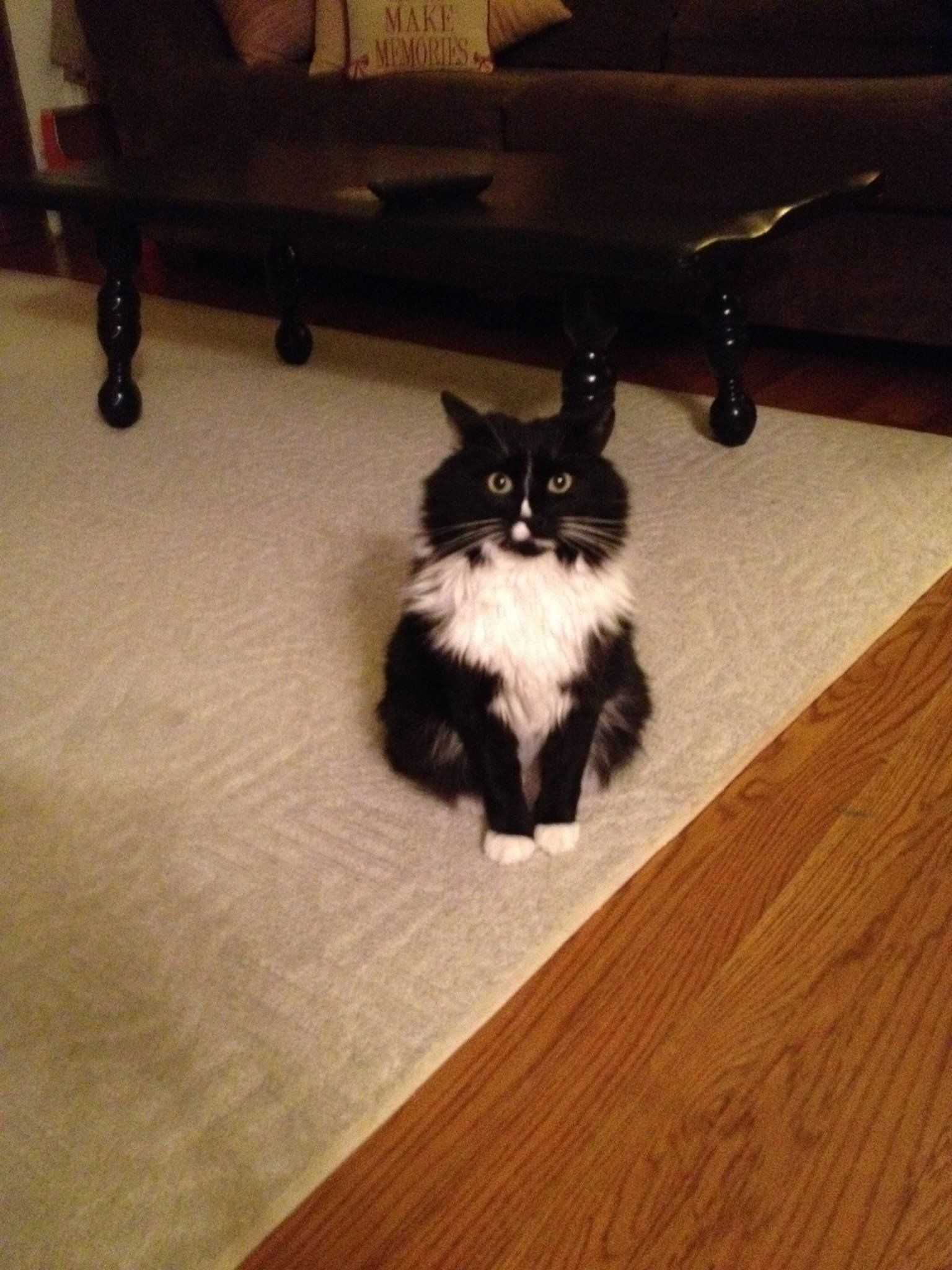 Missing in Waterbury.  We lost our beloved cat Lucy on the 14th of May. She is black and white long haired. She is also a inside cat. Lost her from our house off of oronoke rd in condos in waterbury. Please if anyone has seen her or has taken her in, please call me 860-329-2230. Our hearts our broken with out her.