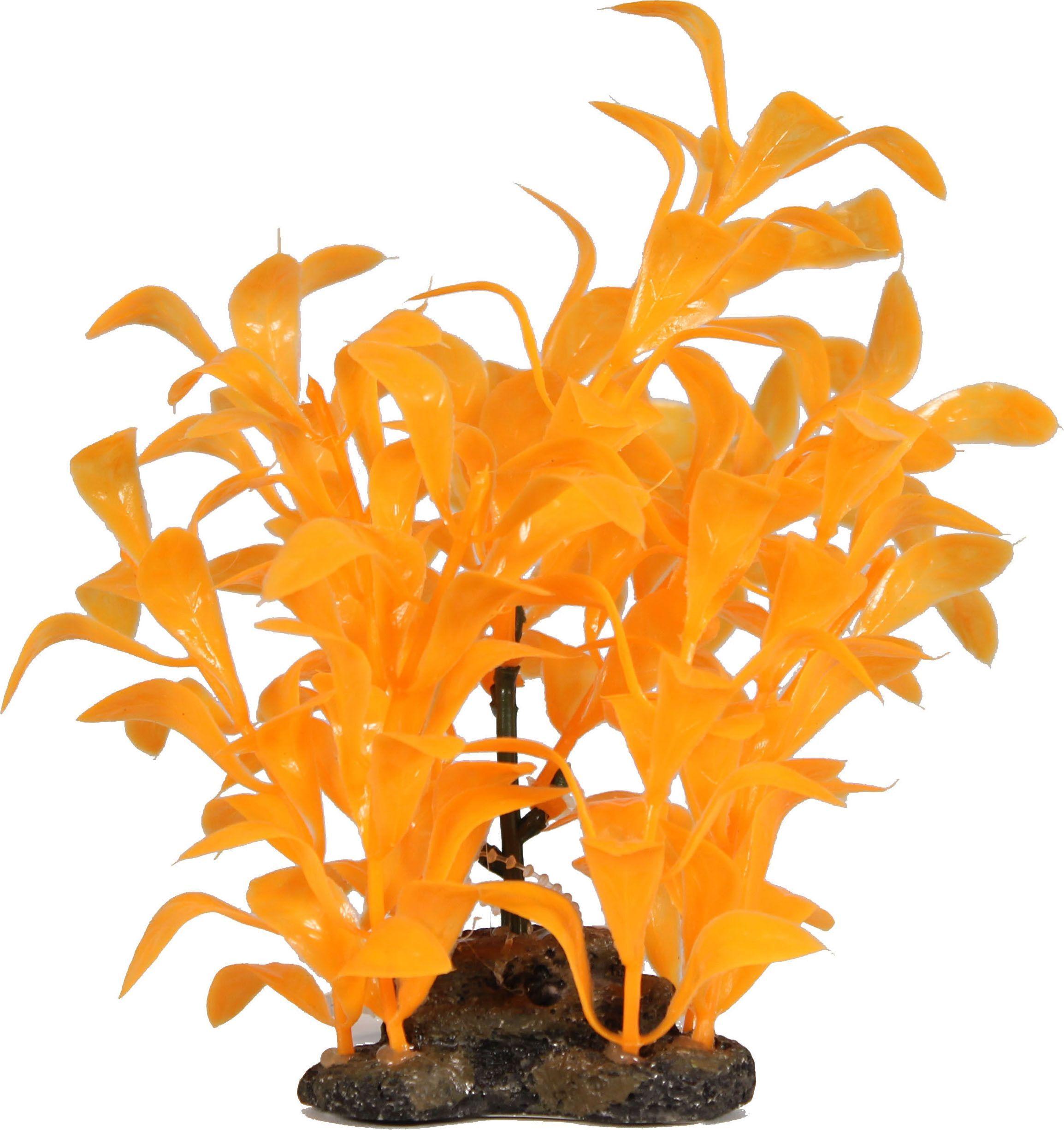 Glow Elements Ludwigia Plant