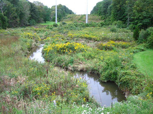 Kellogg Creek + Dead River Watershed Plans (Lake County