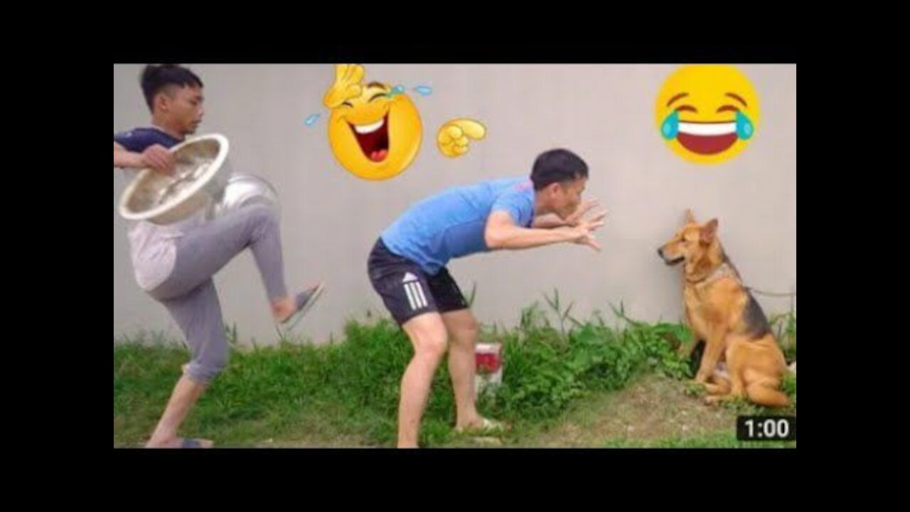 Try Not To Laugh Funny Videos 2021 Best Funny Videos Comedy Videos Funny Videos Try Not To Laugh Funny Laugh L In 2021 Funny Gif Try Not To Laugh Watch Funny Videos
