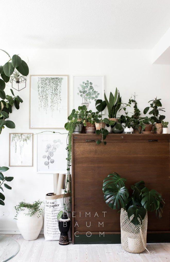 1 Pflanze - 3 Styles {Urban Jungle Bloggers} - HEIMATBAUM Scethno - pflanzen dekoration wohnzimmer