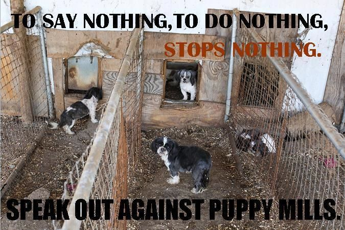 Puppy Mills Horror Show Pet Stores And Puppy Mills