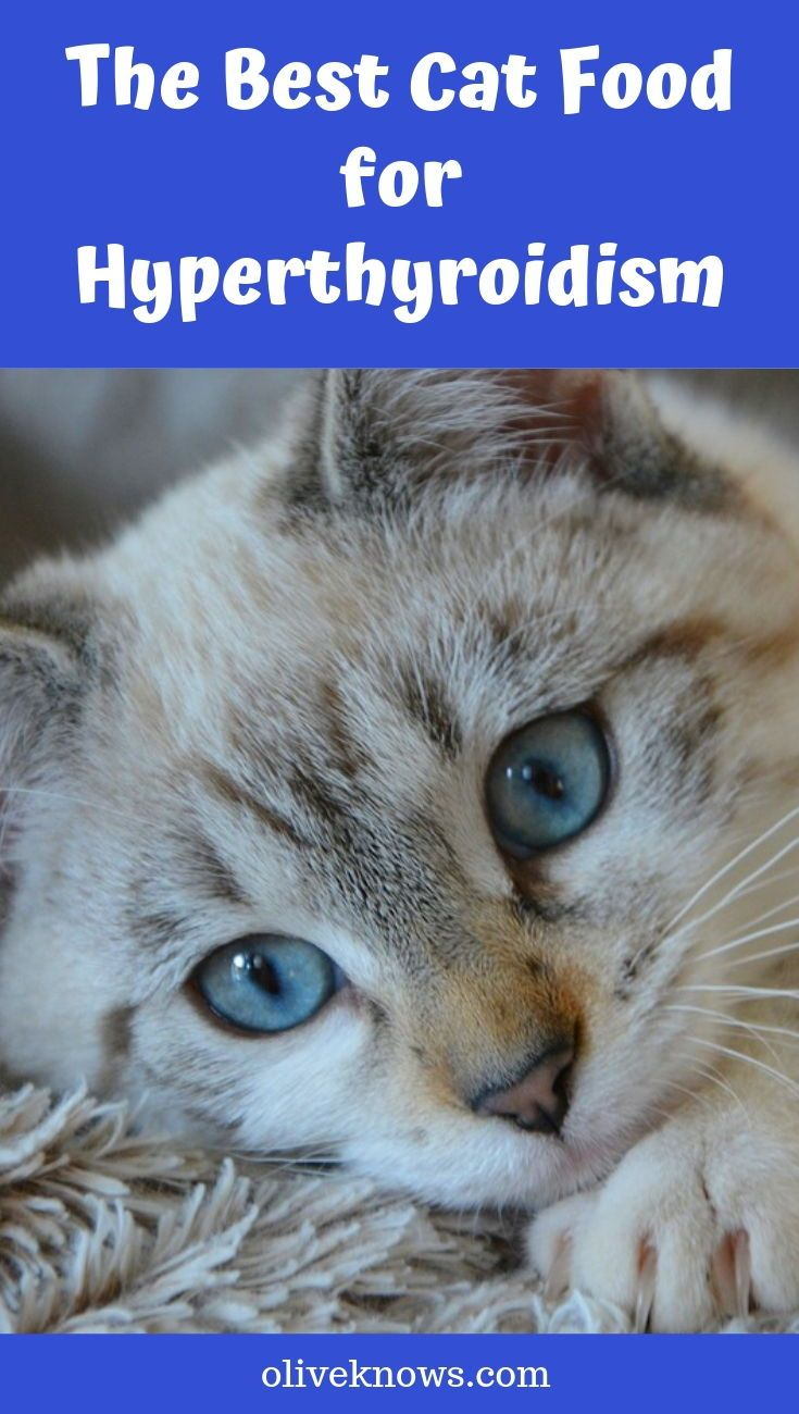 Nipsey's Story Hyperthyroidism in Cats Cats, Enlarged